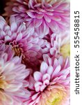 beautiful flowers background... | Shutterstock . vector #555458815