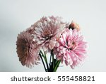 beautiful flowers background... | Shutterstock . vector #555458821