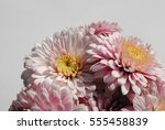 beautiful flowers background... | Shutterstock . vector #555458839