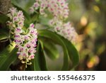 orchids of thailand | Shutterstock . vector #555466375
