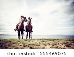 young tourist couple horseback... | Shutterstock . vector #555469075