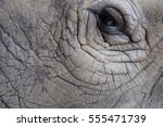 rhinoceros's eye | Shutterstock . vector #555471739