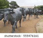 Small photo of Dallas, TX USA/June 29, 2014: Herd of longhorn cattle walking down a trail, as part of a landmark, 73-piece bronze cattle drive sculpture in Pioneer Plaza, donated to Dallas by the Trammel Crow Co