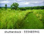 Trail In Prairie Restoration...