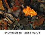 autumn leaf on multiple layers... | Shutterstock . vector #555570775