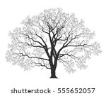 oak tree. isolated oak on white ... | Shutterstock .eps vector #555652057