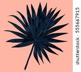 exotic flowers set. botanical... | Shutterstock .eps vector #555667915