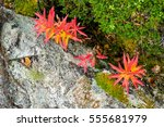 Small Red Leaf Plants Growing...