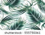 tropical palm leaves  jungle... | Shutterstock .eps vector #555750361