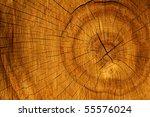 cut  tree  oak | Shutterstock . vector #55576024
