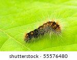 Small Hairy Caterpillar...