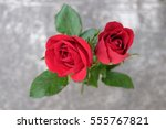Small photo of Closeup Twain Red Roses background gray cement