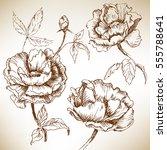 hand drawn roses. vector... | Shutterstock .eps vector #555788641