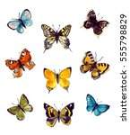 watercolor butterfly set. hand...   Shutterstock . vector #555798829