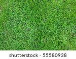 green grass background | Shutterstock . vector #55580938