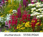 A colourful flower border with Lysimachia, Lupins, Coreopsis and Leucanthemums in a cottage garden