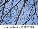 Small photo of Selective focus to branch of Samanea saman or Albizia saman (Tree names) at sunrise