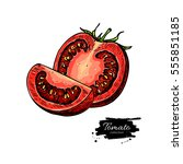 tomato vector drawing. isolated ... | Shutterstock .eps vector #555851185