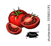 tomato vector drawing. isolated ... | Shutterstock .eps vector #555851191
