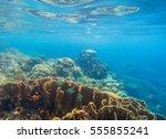 underwater scenery with coral... | Shutterstock . vector #555855241