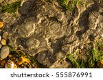 Small photo of Bedrock by sea with remains of ammonites. Charmouth Beach, Dorset, England, United Kingdom