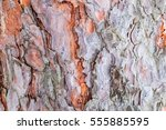 Pine Bark Close By. The Textur...