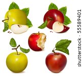 vector illustration.  set of... | Shutterstock .eps vector #55589401