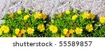 Small photo of A close-up image of delicate yellow flowers growing on a rock. Biotic and abiotic components concept.