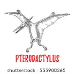 pterodactyl  engraving style ... | Shutterstock .eps vector #555900265