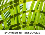 Image Soft Focus Green Palm...
