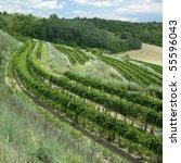 vineyards  czech republic   Shutterstock . vector #55596043