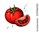 tomato vector drawing. isolated ... | Shutterstock .eps vector #555986905