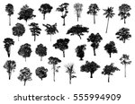 black tree silhouettes on white ... | Shutterstock . vector #555994909