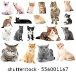 Stock photo collage of cute cats on white background 556001167