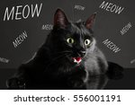 cute cat and word meow on dark... | Shutterstock . vector #556001191