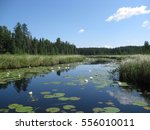 lily pad covered path leads to... | Shutterstock . vector #556010011
