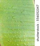 water drop on banana leaf | Shutterstock . vector #556052347