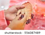 hands of bride putting ring on... | Shutterstock . vector #556087489