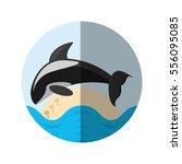 killer whale marine wildlife... | Shutterstock .eps vector #556095085