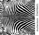 zebra print pattern. seamless... | Shutterstock .eps vector #556098601