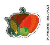 fresh pumpking  corn and tomato ... | Shutterstock .eps vector #556099225