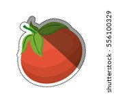 fresh tomato vegetable icon... | Shutterstock .eps vector #556100329