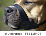closeup of a dog muzzled | Shutterstock . vector #556115479