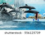Dolphins Are Jumping During Th...