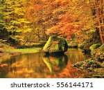 Autumn Colorful Forest Above...
