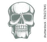 vector skull illustration. hand ...   Shutterstock .eps vector #556217641