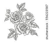 hand drawn vector flowers.... | Shutterstock .eps vector #556223587