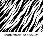 tiger texture abstract... | Shutterstock .eps vector #556229824
