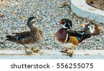 Two Beautiful Ducks