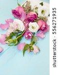 overhead view beautiful pink... | Shutterstock . vector #556271935